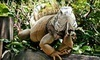 World of Discovery Reptile Zoo Coupons Ann Arbor, Michigan Deals