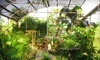 Williams Magical Garden Center & Landscape Coupons Naples, Florida Deals