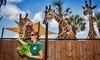 Naples Zoo at Caribbean Gardens Coupons Naples, Florida Deals