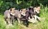 Haliburton Forest & Wild Life Reserve Coupons Haliburton, Ontario Deals