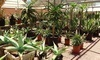 Desert Gardens Nursery Coupons Phoenix, Arizona Deals