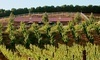 Frangipani Estate Winery Coupons Temecula, California Deals
