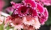 Bobbie's Flowers & Gift Shop Coupons Tempe, Arizona Deals