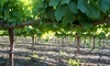 Jess Jones Vineyard Coupons Dixon, California Deals