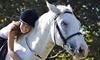 Embracing Horses Coupons Longmont, Colorado Deals