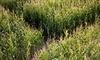 DeBuck's Corn Maze and Pumpkin Patch Coupons Belleville, Michigan Deals