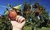 Hillcrest Orchards Coupons