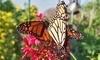 South Texas Botanical Gardens & Nature Center Coupons