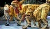 Walking with Dinosaurs Coupons