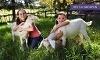 Green Meadows Petting Farm Coupons