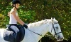 Manito Equestrian Center Coupons