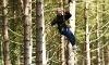 Treetop Adventures Coupons