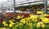 Floral Acres Greenhouses & Garden Centre Coupons