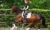 New York Dressage Coupons
