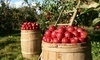 George Hill Orchards Coupons