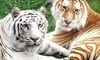 Cougar Mountain Zoo Coupons