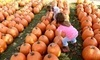 Blackburn Pumpkin and Sunflower Farm Coupons