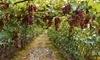 The Gracious Grape Coupons