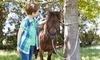 Land of Little Horses Farm Park Coupons