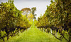 Philip Carter Winery Coupons Hume, Virginia Deals